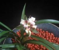 기화(7설 )꽃2경