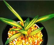 단엽중투(태황) 무지 2촉