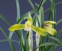 황화(무명)꽃 2경
