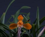 주금화(무명04촉 꽃 4촉 꽃 1경