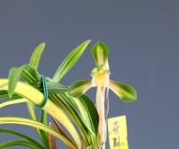 중투화(무명)첫꽃